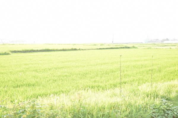 糸島の畑の写真です。案山子がいます。