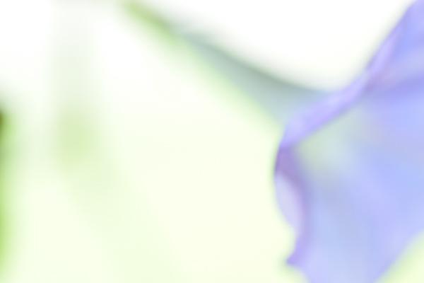 ca-koのウェブサイトです。四季折々の道草。心にとまった身近な草花を、小さな発見を楽しみながら出会った器に合わせています。朝顔の写真です。
