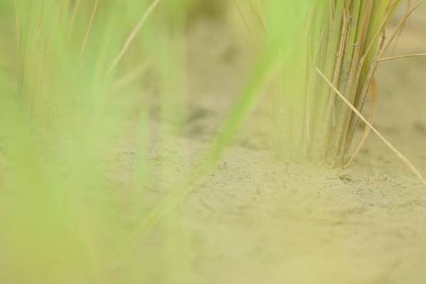 ca-koのウェブサイトです。四季折々の道草。心にとまった身近な草花を、小さな発見を楽しみながら出会った器に合わせています。水田の写真です。