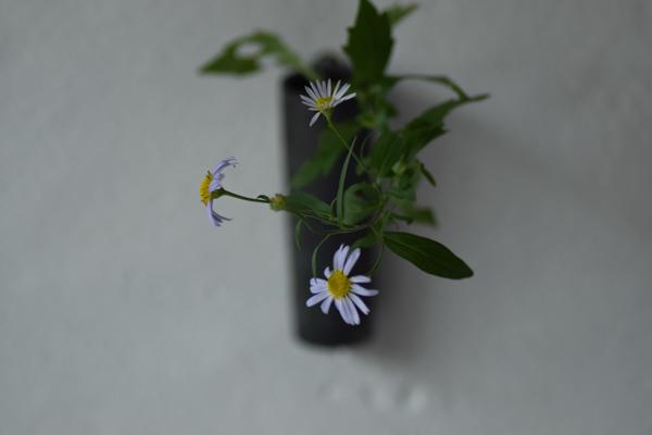 ca-koのウェブサイトです。四季折々の道草。心にとまった身近な草花を、小さな発見を楽しみながら出会った器に合わせています。抛入花の写真です。野紺菊を入れました。