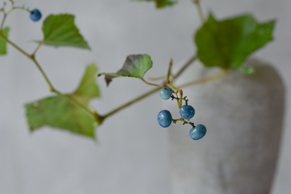 ca-koのウェブサイトです。四季折々の道草。心にとまった身近な草花を、小さな発見を楽しみながら出会った器に合わせています。抛入花の写真です。野葡萄を入れました。