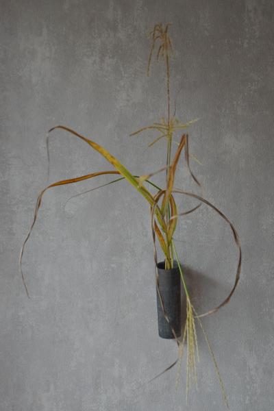 ca-koのウェブサイトです。四季折々の道草。心にとまった身近な草花を、小さな発見を楽しみながら出会った器に合わせています。抛入花の写真です。糸芒を入れました。