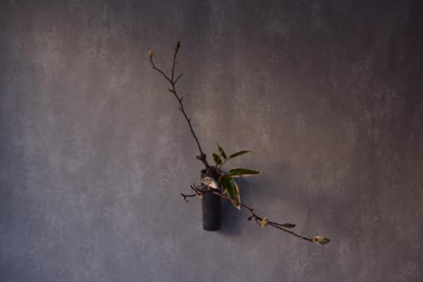 ca-koのウェブサイトです。四季折々の道草。心にとまった身近な草花を、小さな発見を楽しみながら出会った器に合わせています。抛入花の写真です。辛夷、熊笹を入れました。