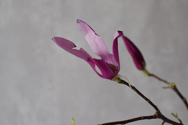 ca-koのウェブサイトです。四季折々の道草。心にとまった身近な草花を、小さな発見を楽しみながら出会った器に合わせています。抛入花の写真です。烏木蓮と椿を入れました。