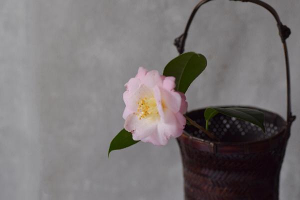 ca-koのウェブサイトです。四季折々の道草。心にとまった身近な草花を、小さな発見を楽しみながら出会った器に合わせています。抛入花の写真です。椿を入れました。