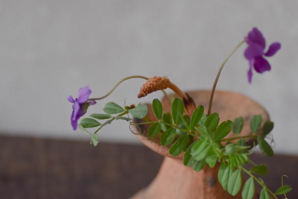 ca-koのウェブサイトです。四季折々の道草。心にとまった身近な草花を、小さな発見を楽しみながら出会った器に合わせています。抛入花の写真です。豌豆と菫、土筆を入れました。