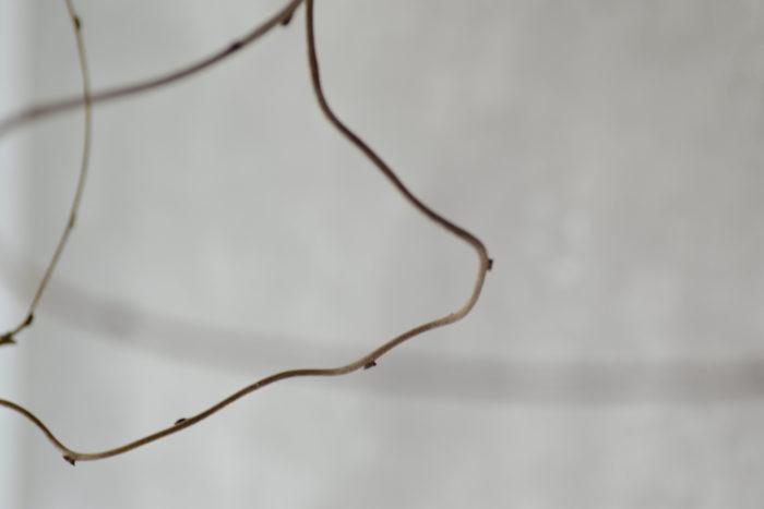 ca-koのウェブサイトです。四季折々の道草。心にとまった身近な草花を、小さな発見を楽しみながら出会った器に合わせています。抛入花の写真です。藤を入れました。