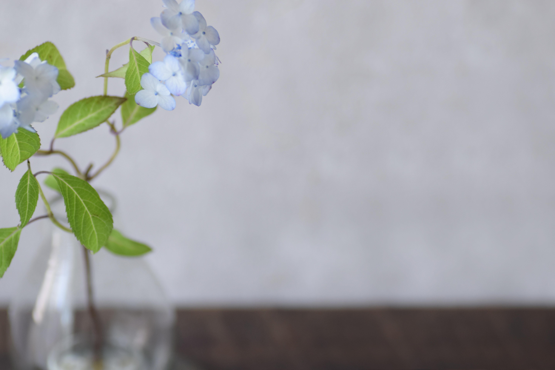 ca-koのウェブサイトです。四季折々の道草。心にとまった身近な草花を、小さな発見を楽しみながら出会った器に合わせています。抛入花の写真です。紫陽花を入れました。
