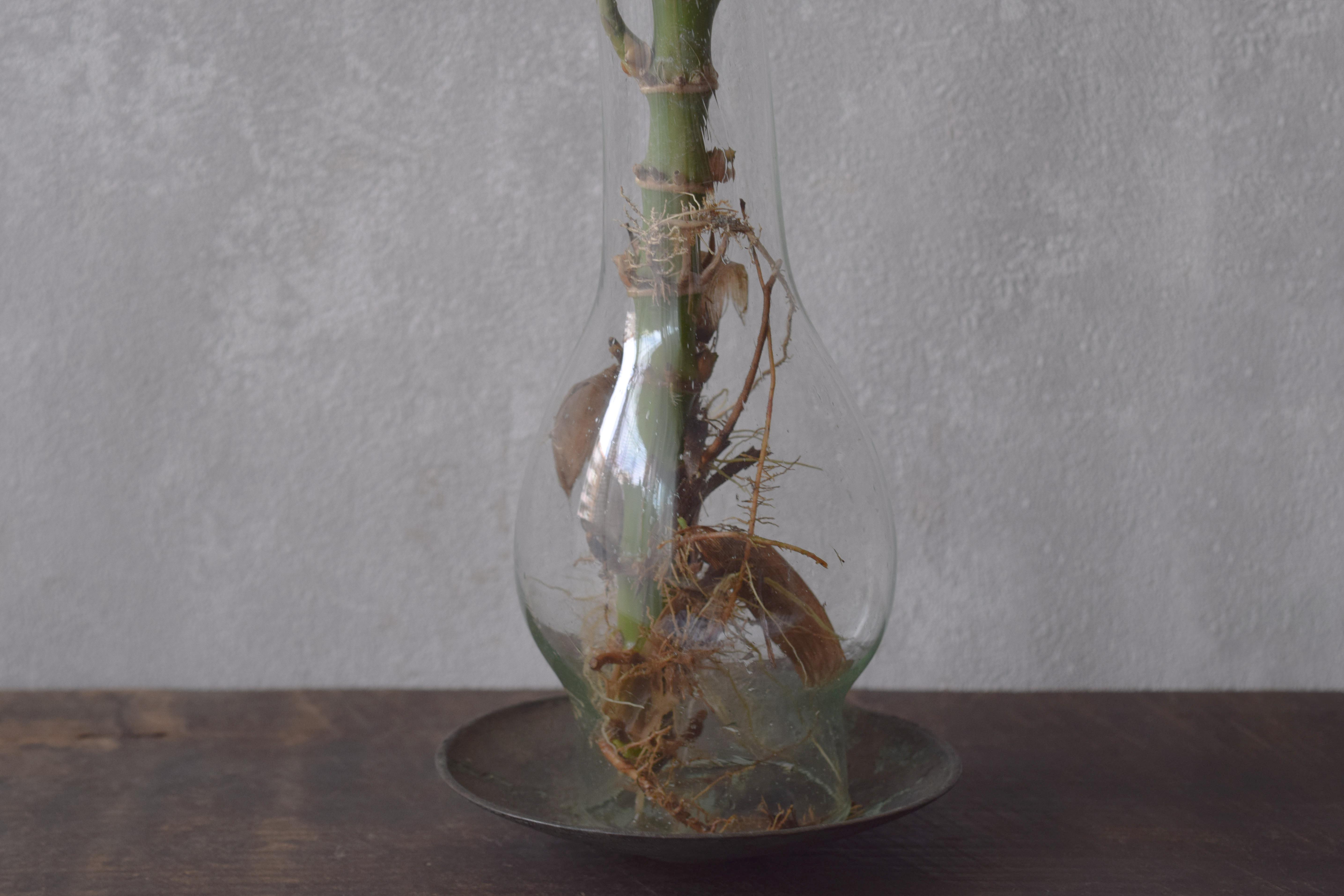ca-koのウェブサイトです。四季折々の道草。心にとまった身近な草花を、小さな発見を楽しみながら出会った器に合わせています。抛入花の写真です。笹を入れました。