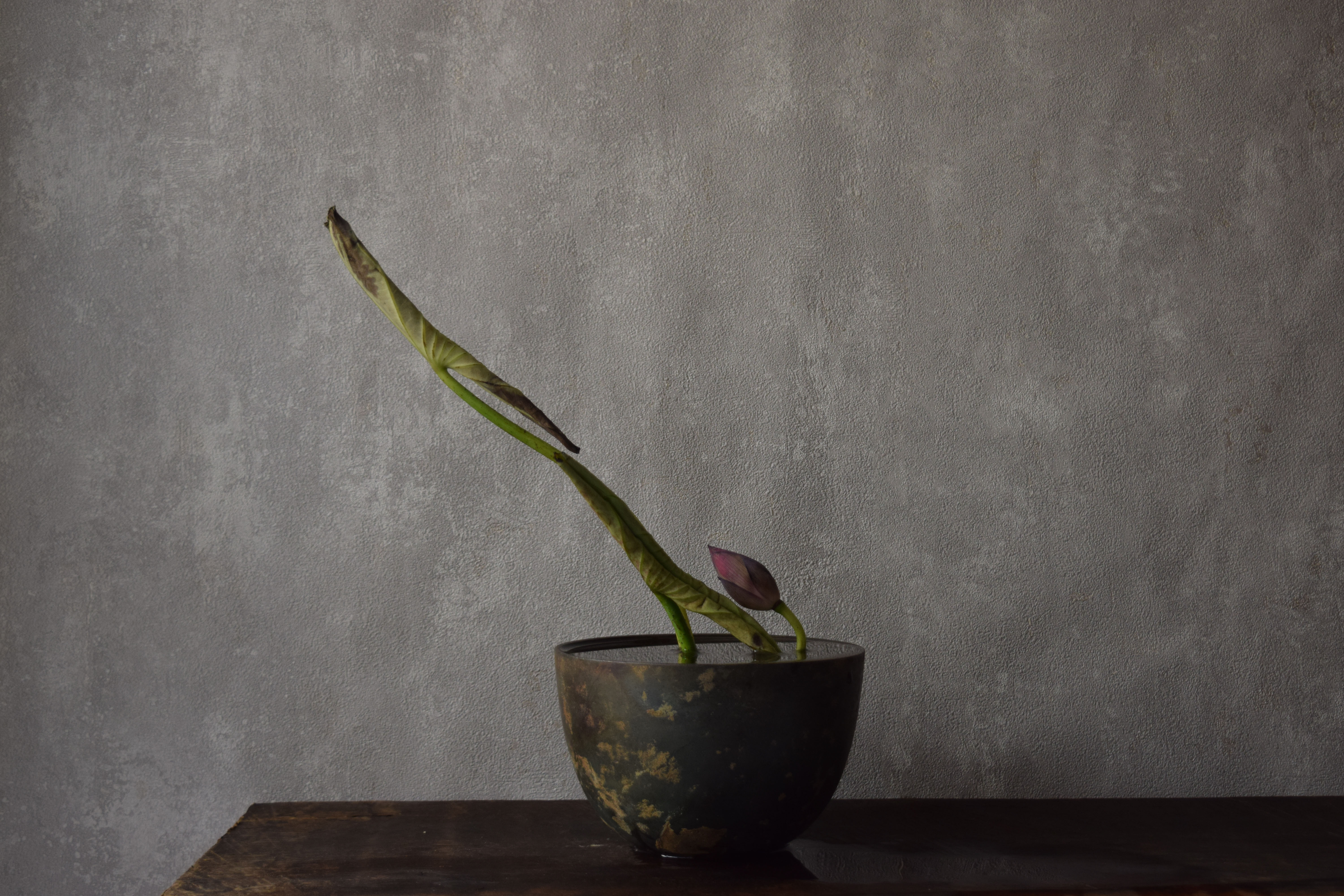We will create a space through plants. Beauty that circulates.