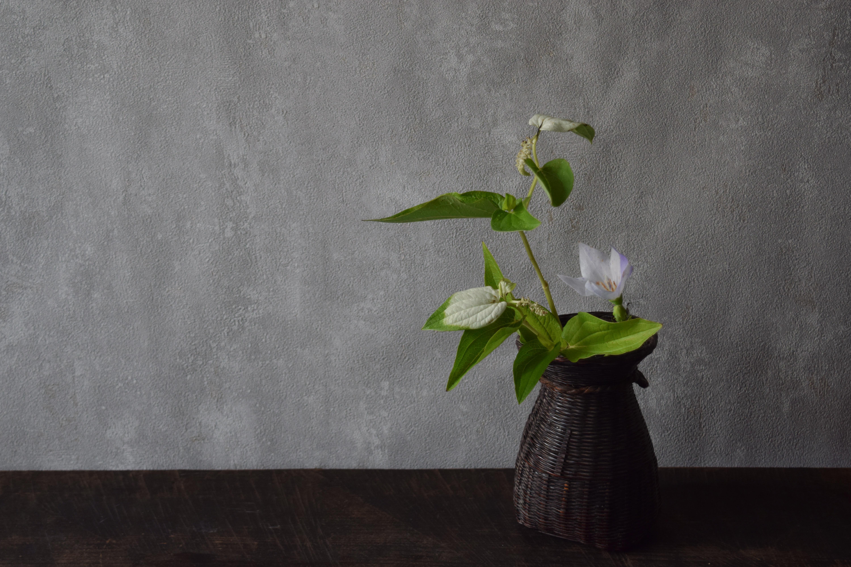 烏山結貴、ca-koのウェブサイトです。四季折々の道草。心にとまった身近な草花を、小さな発見を楽しみながら出会った器に合わせています。抛入花の写真です。半夏生と桔梗を入れました。
