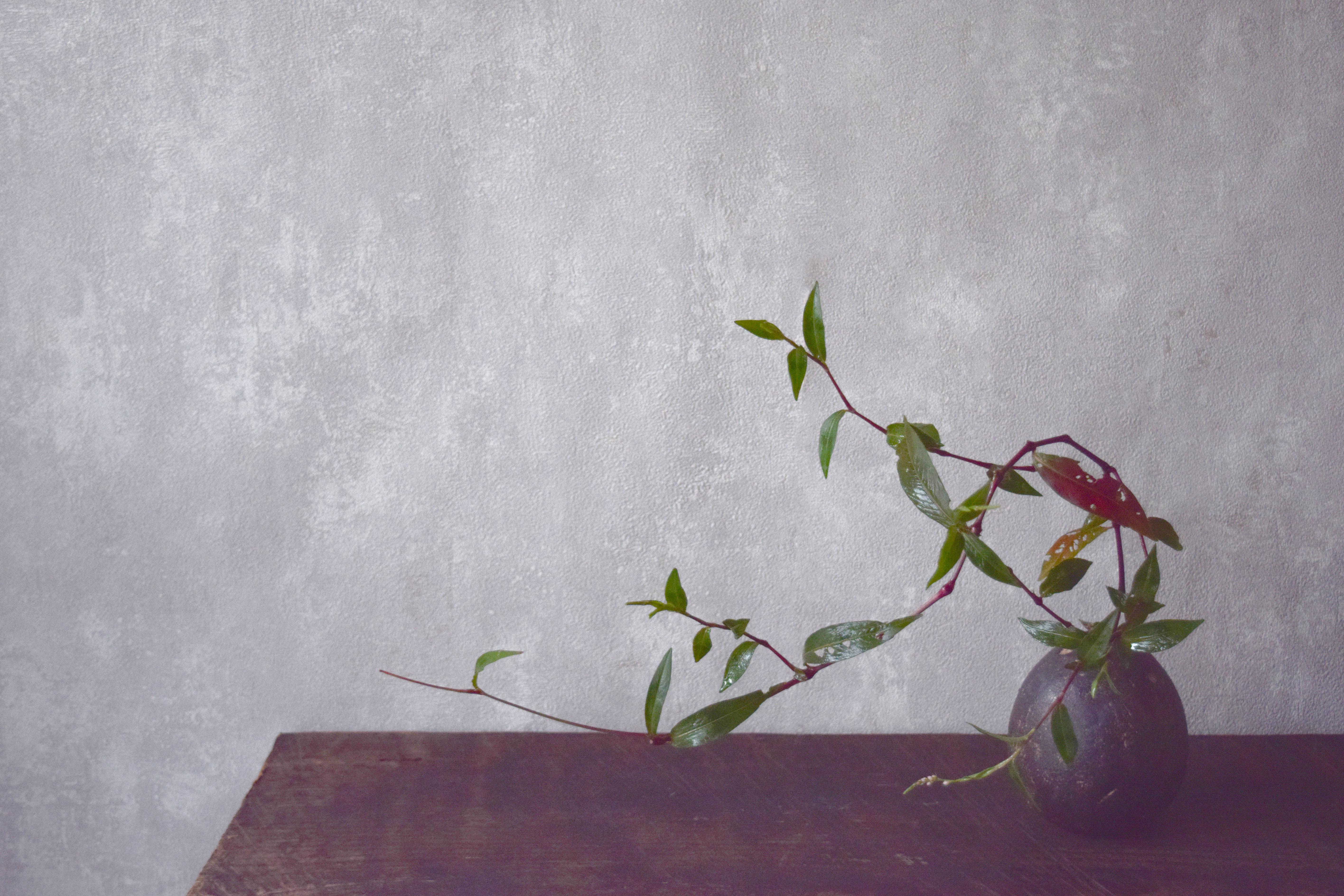 烏山結貴、ca-koのウェブサイトです。四季折々の道草。心にとまった身近な草花を、小さな発見を楽しみながら出会った器に合わせています。抛入花の写真です。蓼を入れました。