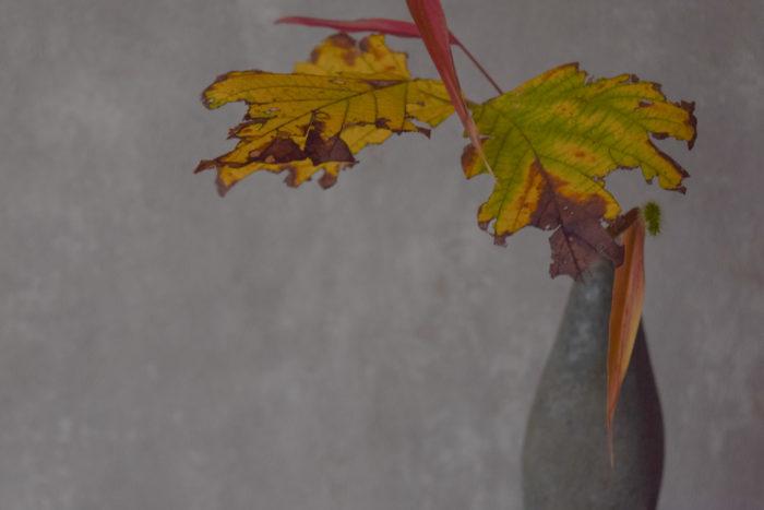 ca-koのウェブサイトです。四季折々の道草。心にとまった身近な草花を、小さな発見を楽しみながら出会った器に合わせています。抛入花の写真です。葛、エノコログサを入れました。