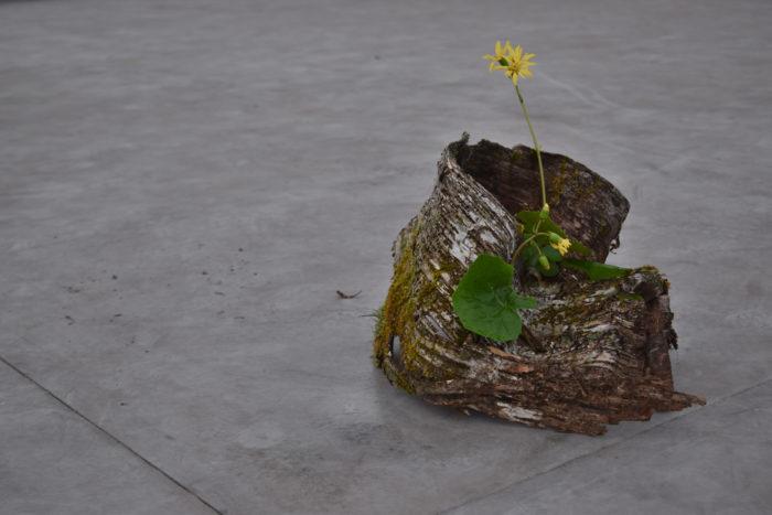烏山結貴、ca-koのウェブサイトです。四季折々の道草。心にとまった身近な草花を、小さな発見を楽しみながら出会った器に合わせています。抛入花の写真です。石蕗を入れました。