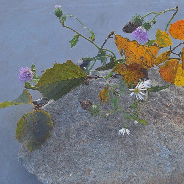 烏山結貴、ca-koのウェブサイトです。四季折々の道草。心にとまった身近な草花を、小さな発見を楽しみながら出会った器に合わせています。抛入花の写真です。万作、薊、野菊を入れました。