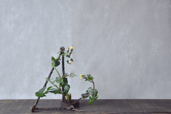 烏山結貴、ca-koのウェブサイトです。四季折々の道草。心にとまった身近な草花を、小さな発見を楽しみながら出会った器に合わせています。抛入花の写真です。野芥子を入れました。