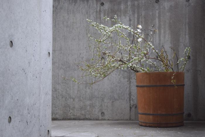 烏山結貴、ca-koのウェブサイトです。四季折々の道草。心にとまった身近な草花を、小さな発見を楽しみながら出会った器に合わせています。抛入花の写真です。辛夷、雪柳、木五倍子を入れました。