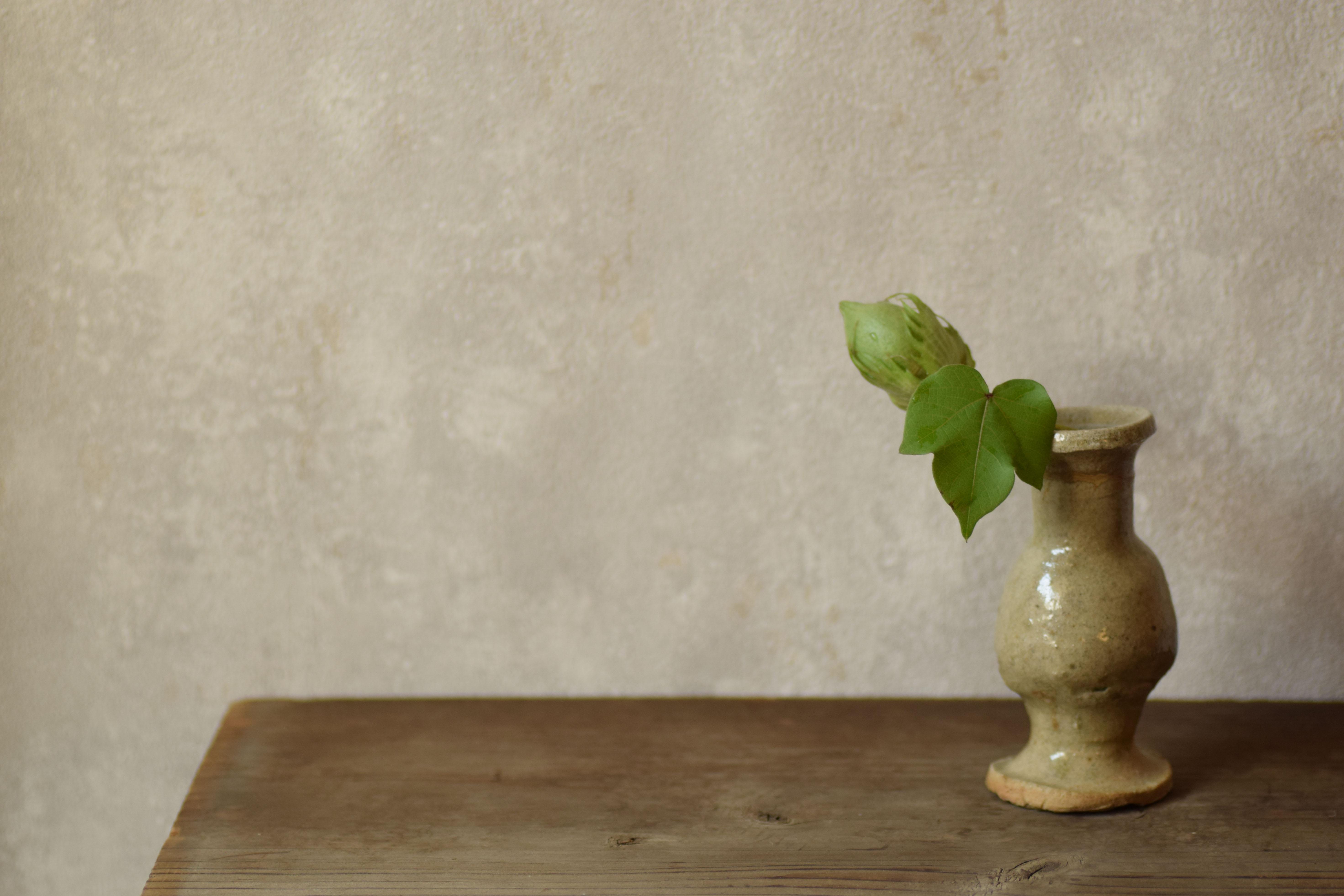 烏山結貴、ca-koのウェブサイトです。四季折々の道草。心にとまった身近な草花を、小さな発見を楽しみながら出会った器に合わせています。抛入花の写真です。綿の実を入れました。