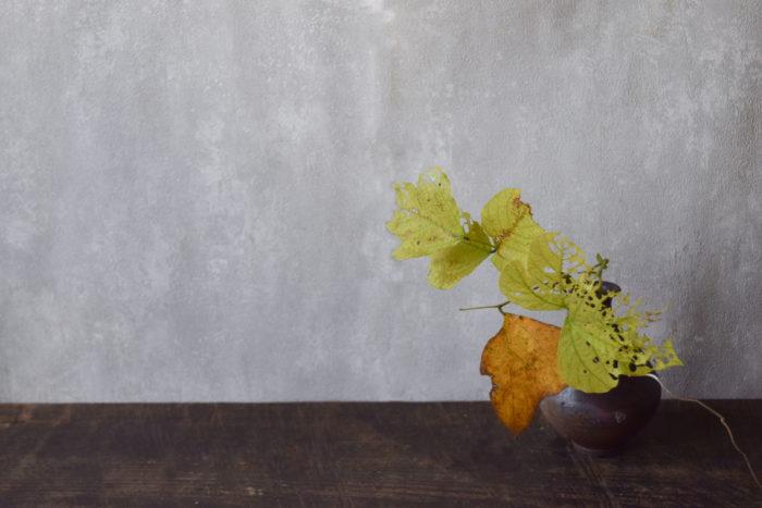 烏山結貴、ca-koのウェブサイトです。四季折々の道草。心にとまった身近な草花を、小さな発見を楽しみながら出会った器に合わせています。抛入花の写真です。葛の葉を入れました。