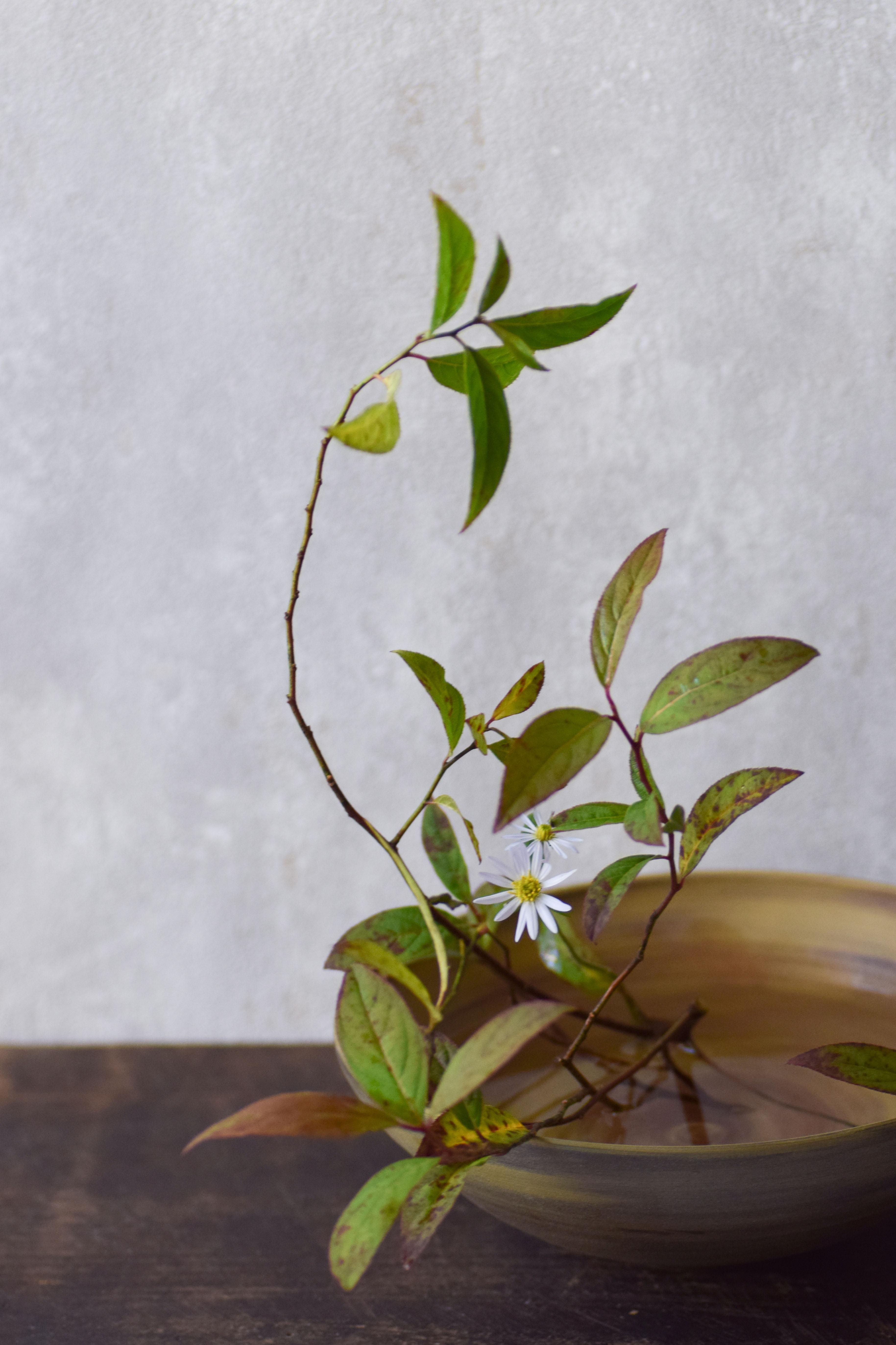 烏山結貴、ca-koのウェブサイトです。四季折々の道草。心にとまった身近な草花を、小さな発見を楽しみながら出会った器に合わせています。抛入花の写真です。リョウブと菊を入れました。