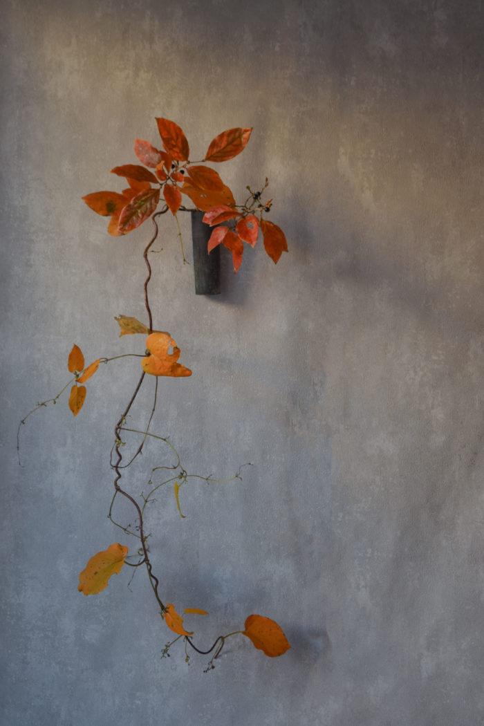 烏山結貴、ca-koのウェブサイトです。四季折々の道草。心にとまった身近な草花を、小さな発見を楽しみながら出会った器に合わせています。抛入花の写真です。山香ばし、山芋を入れました。