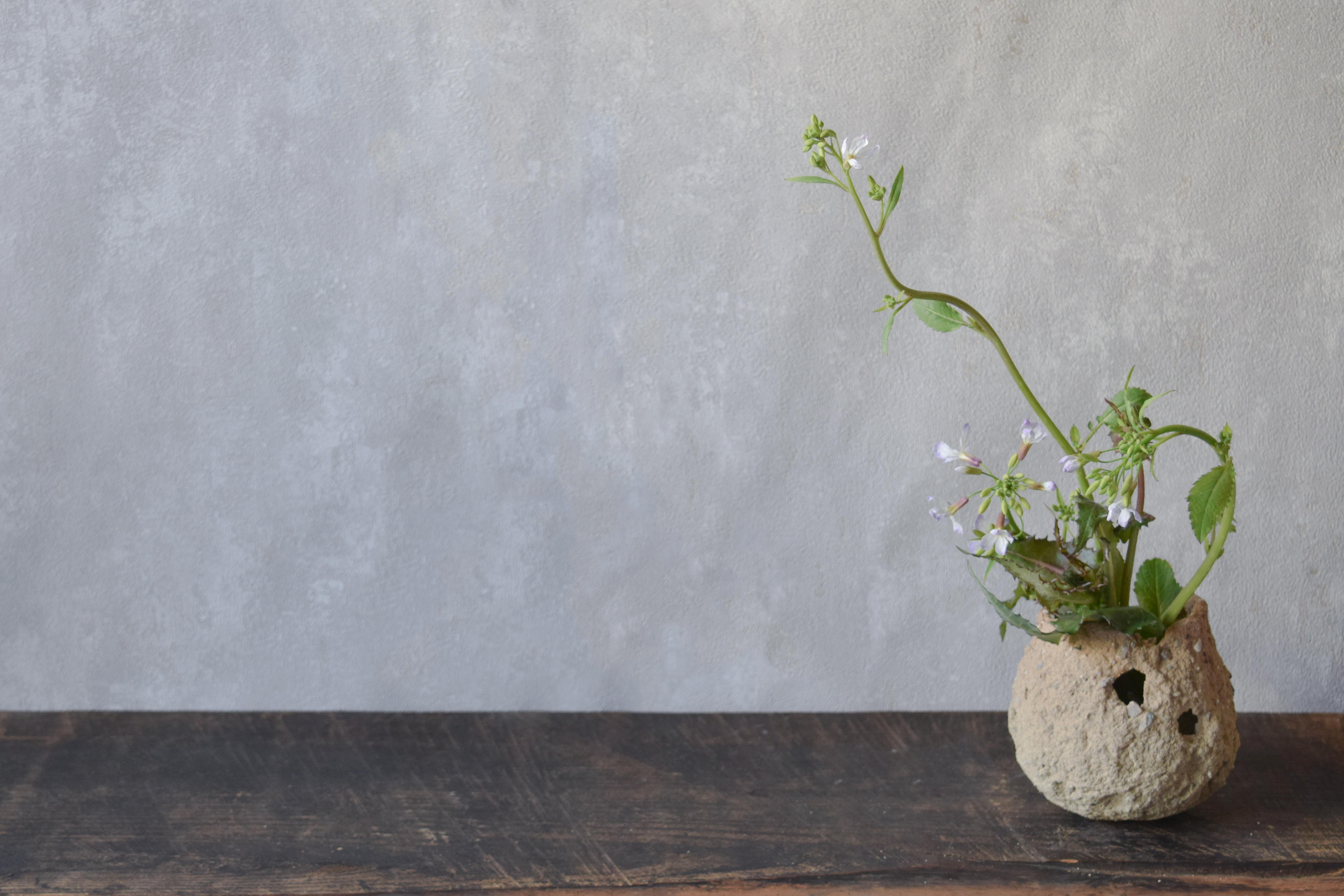 烏山結貴、ca-koのウェブサイトです。四季折々の道草。心にとまった身近な草花を、小さな発見を楽しみながら出会った器に合わせています。抛入花の写真です。大根の花を入れました。